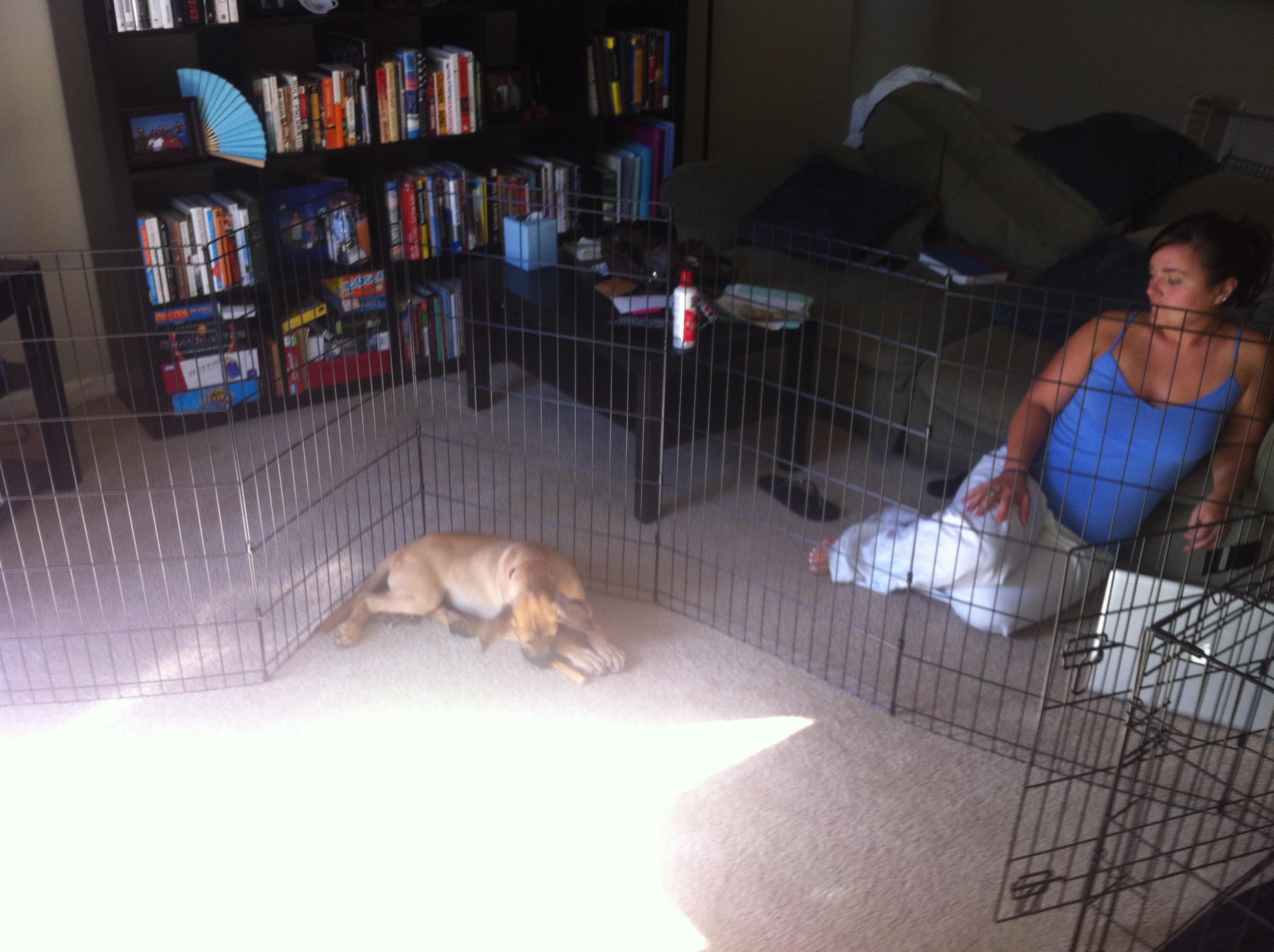 dog shenanigans willblogforfooddotcom page 2. Black Bedroom Furniture Sets. Home Design Ideas